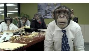 animal meeting monkey