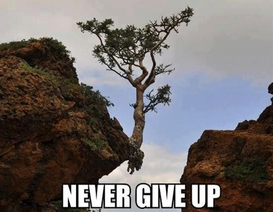 Never Give Up! When wanting success in training, business or life...you must persist!
